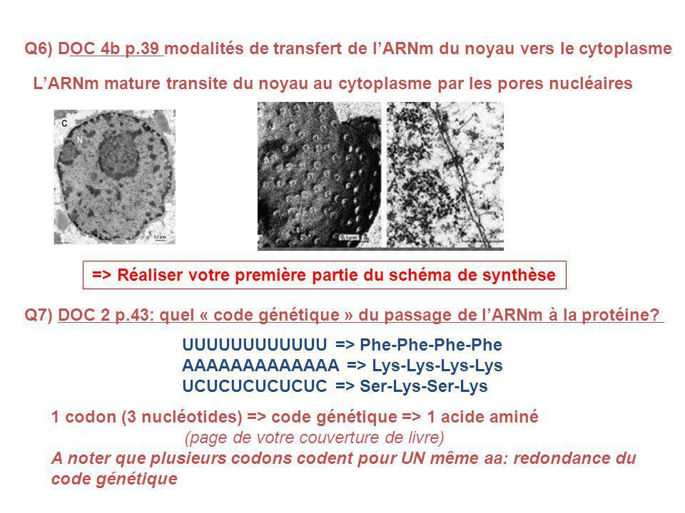 Q6) DOC 4b p.39 modalités de transfert de lARNm du noyau vers le cytoplasme LARNm mature transite du noyau au cytoplasme par les pores nucléaires Q7) DOC 2 p.43: quel « code génétique » du passage de lARNm à la protéine.