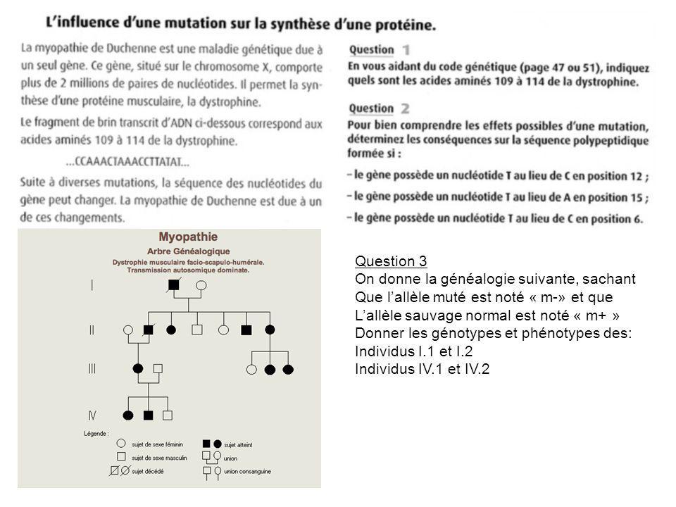 Question 3 On donne la généalogie suivante, sachant Que lallèle muté est noté « m-» et que Lallèle sauvage normal est noté « m+ » Donner les génotypes et phénotypes des: Individus I.1 et I.2 Individus IV.1 et IV.2