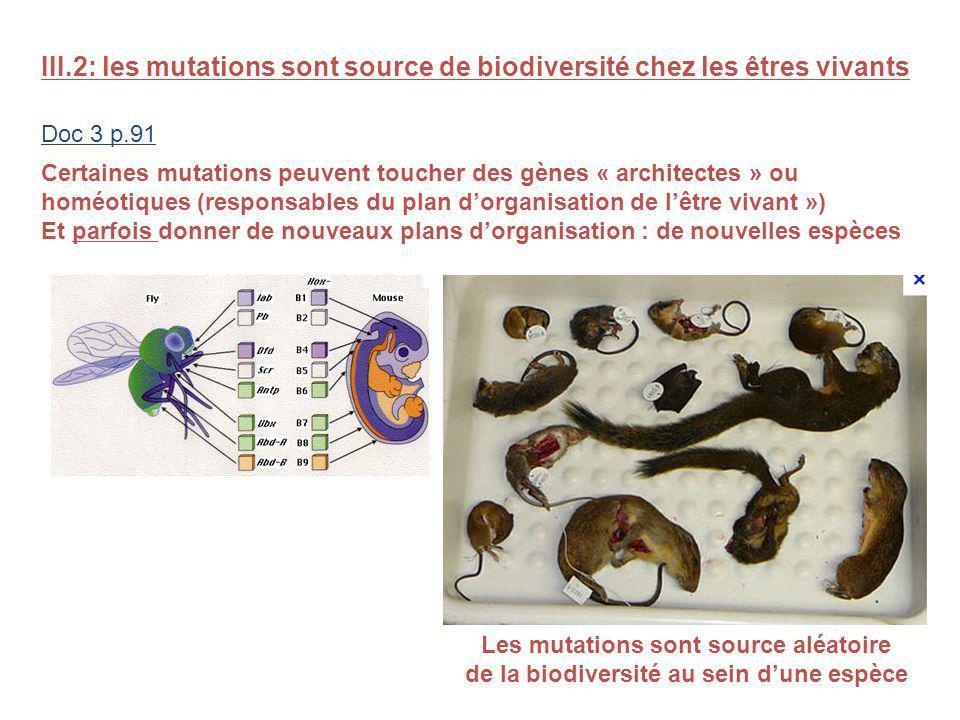 III.2: les mutations sont source de biodiversité chez les êtres vivants Doc 3 p.91 Certaines mutations peuvent toucher des gènes « architectes » ou homéotiques (responsables du plan dorganisation de lêtre vivant ») Et parfois donner de nouveaux plans dorganisation : de nouvelles espèces Les mutations sont source aléatoire de la biodiversité au sein dune espèce