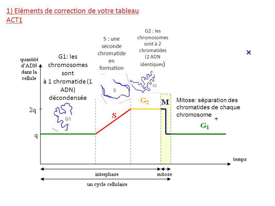 G1: les chromosomes sont à 1 chromatide (1 ADN) décondensée S : une seconde chromatide en formation G2 : les chromosomes sont à 2 chromatides (2 ADN identiques ) + 1) Eléments de correction de votre tableau ACT1 Mitose: séparation des chromatides de chaque chromosome