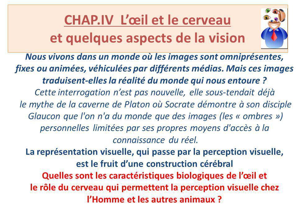 CHAP.IV Lœil et le cerveau et quelques aspects de la vision Nous vivons dans un monde où les images sont omniprésentes, fixes ou animées, véhiculées p