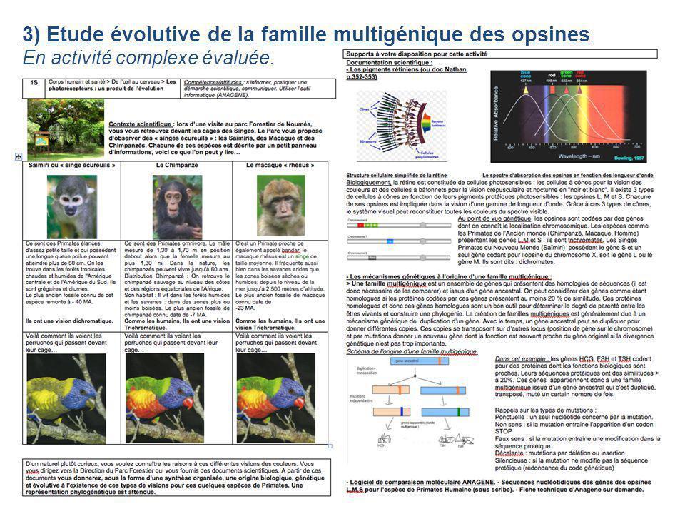 3) Etude évolutive de la famille multigénique des opsines En activité complexe évaluée.