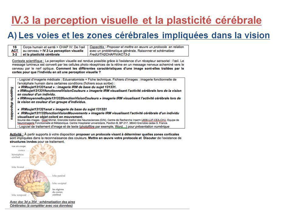 IV.3 la perception visuelle et la plasticité cérébrale A)Les voies et les zones cérébrales impliquées dans la vision