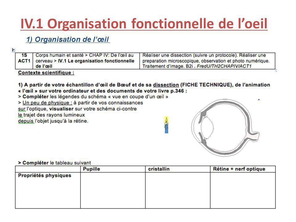 IV.1 Organisation fonctionnelle de loeil 1) Organisation de lœil