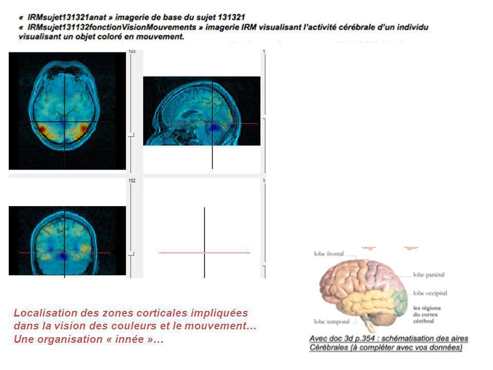 Localisation des zones corticales impliquées dans la vision des couleurs et le mouvement… Une organisation « innée »…