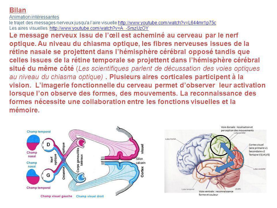 Bilan Animation intéressantes le trajet des messages nerveux jusqu'a laire visuelle http://www.youtube.com/watch?v=L644mr1p75chttp://www.youtube.com/w