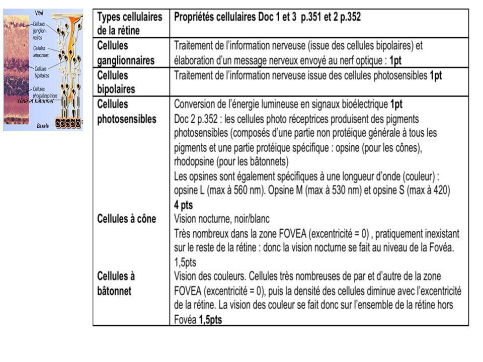 C) Les perturbations chimiques de la vision Effet des drogues sur lactivité cérébrale
