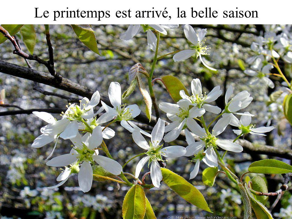 Le printemps est arrivé, la belle saison