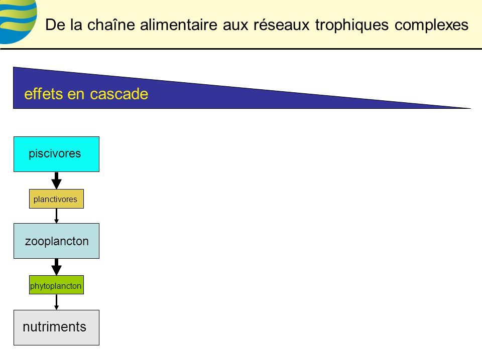 effets en cascade phytoplancton zooplancton piscivores nutriments planctivores De la chaîne alimentaire aux réseaux trophiques complexes