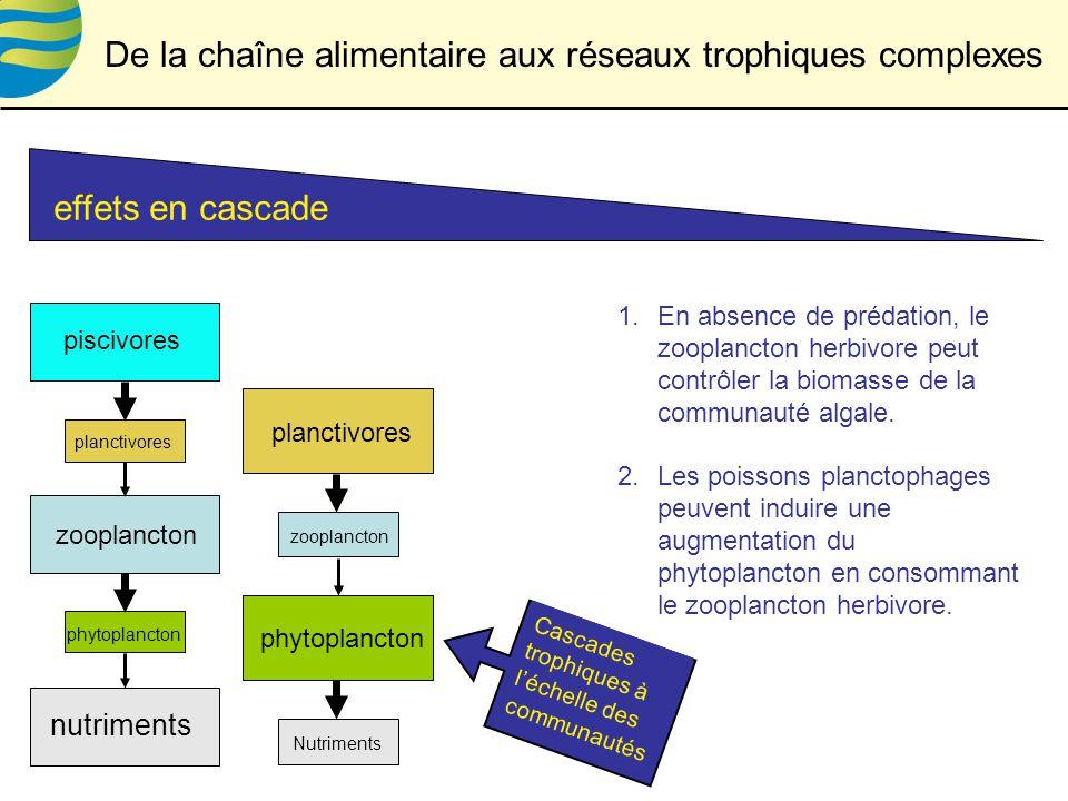 effets en cascade Cascades trophiques à léchelle des communautés phytoplancton zooplancton piscivores nutriments planctivores zooplancton Nutriments planctivores phytoplancton De la chaîne alimentaire aux réseaux trophiques complexes 1.En absence de prédation, le zooplancton herbivore peut contrôler la biomasse de la communauté algale.