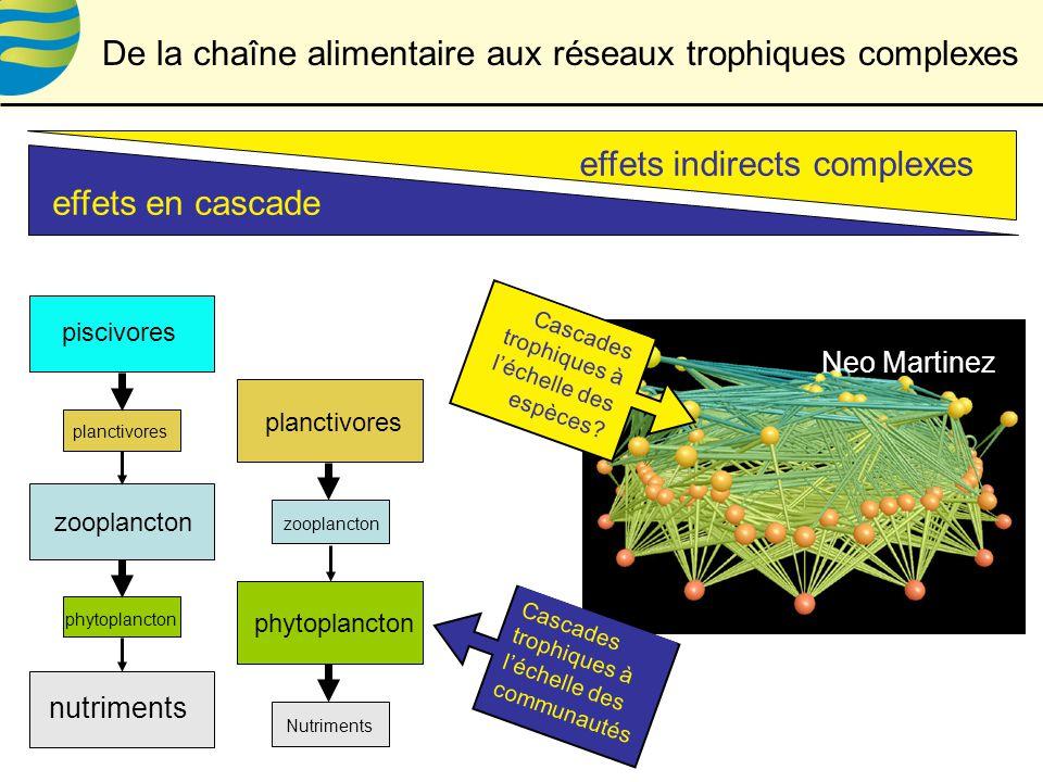 effets indirects complexes effets en cascade phytoplancton zooplancton piscivores nutriments planctivores zooplancton Nutriments planctivores phytoplancton De la chaîne alimentaire aux réseaux trophiques complexes Neo Martinez Cascades trophiques à léchelle des espèces.