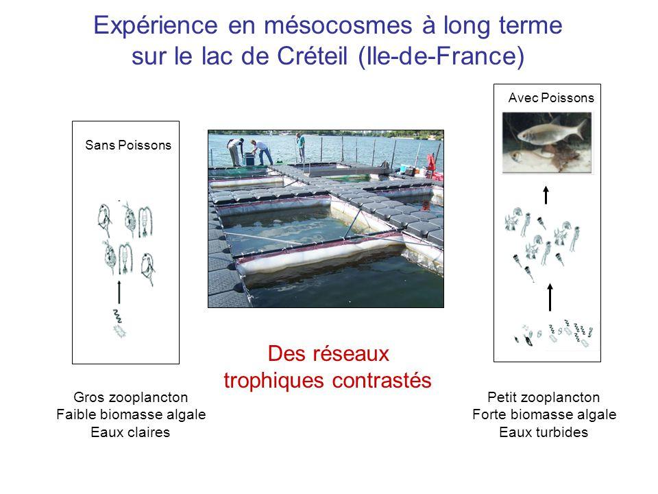 Sans Poissons Avec Poissons Gros zooplancton Faible biomasse algale Eaux claires Petit zooplancton Forte biomasse algale Eaux turbides Des réseaux trophiques contrastés Expérience en mésocosmes à long terme sur le lac de Créteil (Ile-de-France)