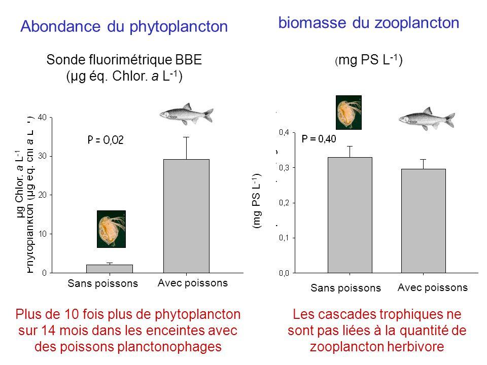 Abondance du phytoplancton Sonde fluorimétrique BBE (µg éq.