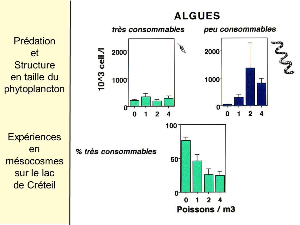 Prédation et Structure en taille du phytoplancton Expériences en mésocosmes sur le lac de Créteil