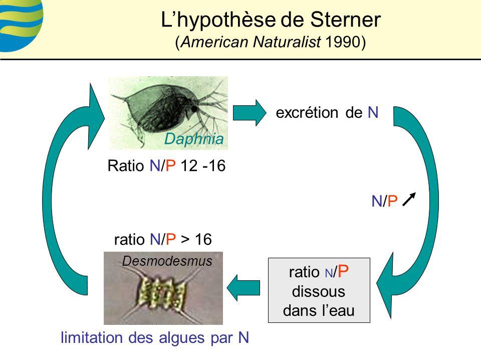 ratio N / P dissous dans leau excrétion de N ratio N/P > 16 Desmodesmus Ratio N/P 12 -16 Daphnia limitation des algues par N N/PN/P Lhypothèse de Sterner (American Naturalist 1990)