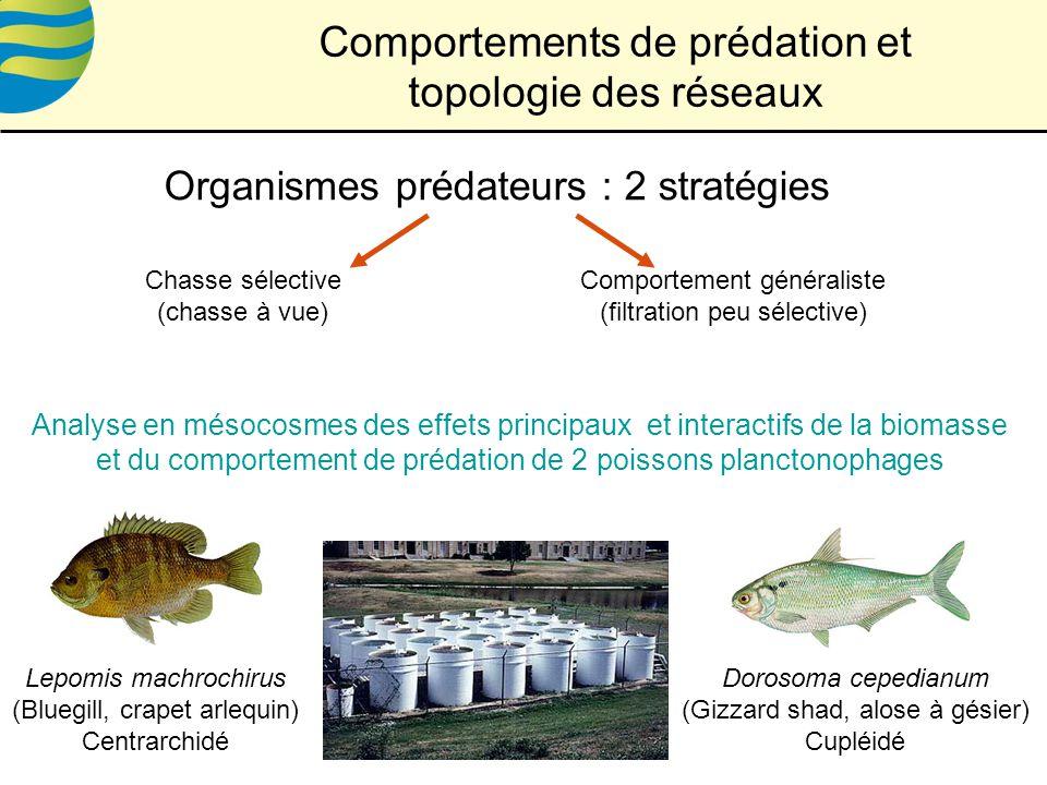 Comportements de prédation et topologie des réseaux Organismes prédateurs : 2 stratégies Chasse sélective (chasse à vue) Comportement généraliste (filtration peu sélective) Lepomis machrochirus (Bluegill, crapet arlequin) Centrarchidé Dorosoma cepedianum (Gizzard shad, alose à gésier) Cupléidé Analyse en mésocosmes des effets principaux et interactifs de la biomasse et du comportement de prédation de 2 poissons planctonophages