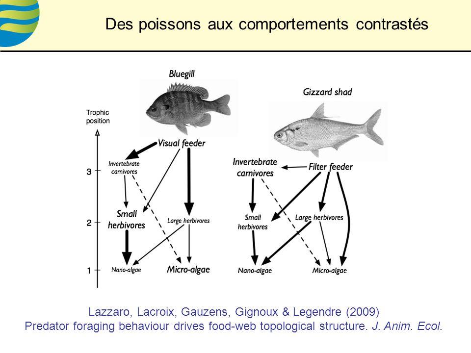 Des poissons aux comportements contrastés Lazzaro, Lacroix, Gauzens, Gignoux & Legendre (2009) Predator foraging behaviour drives food-web topological structure.