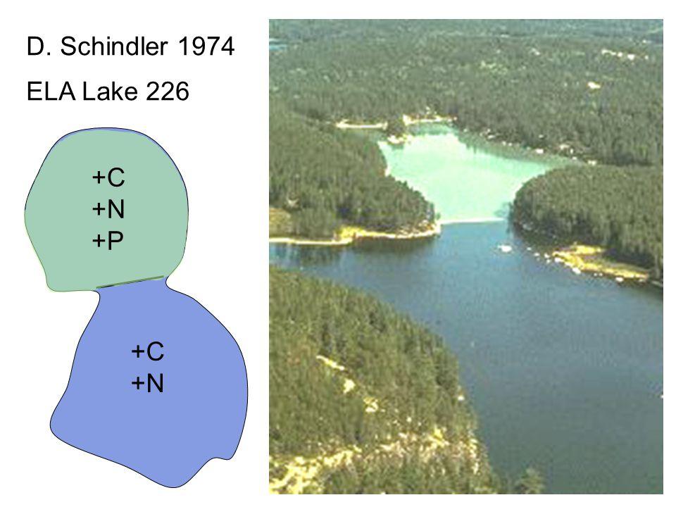 ELA Lake 226 D. Schindler 1974 +C +N +C +N +P