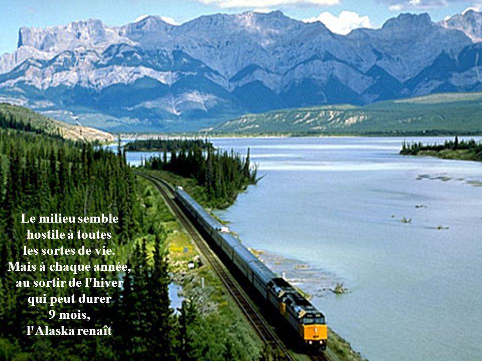 Les attractions panoramiques de l'Alaska peuvent être divisées en plusieurs régions distinctes, avec la ville d'Anchorage approximativement au centre