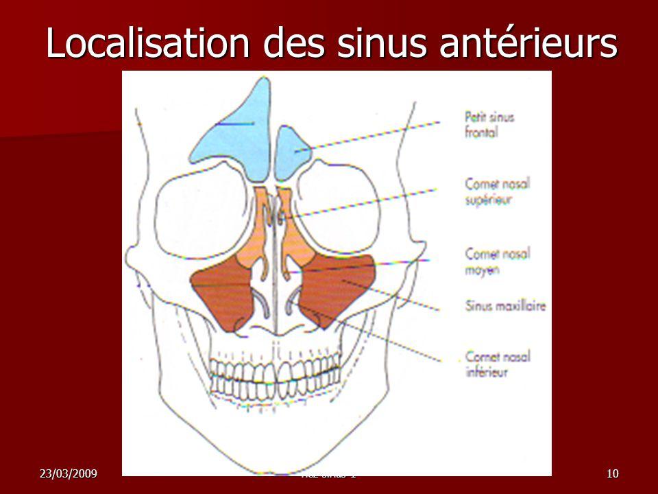 23/03/2009nez sinus 110 Localisation des sinus antérieurs