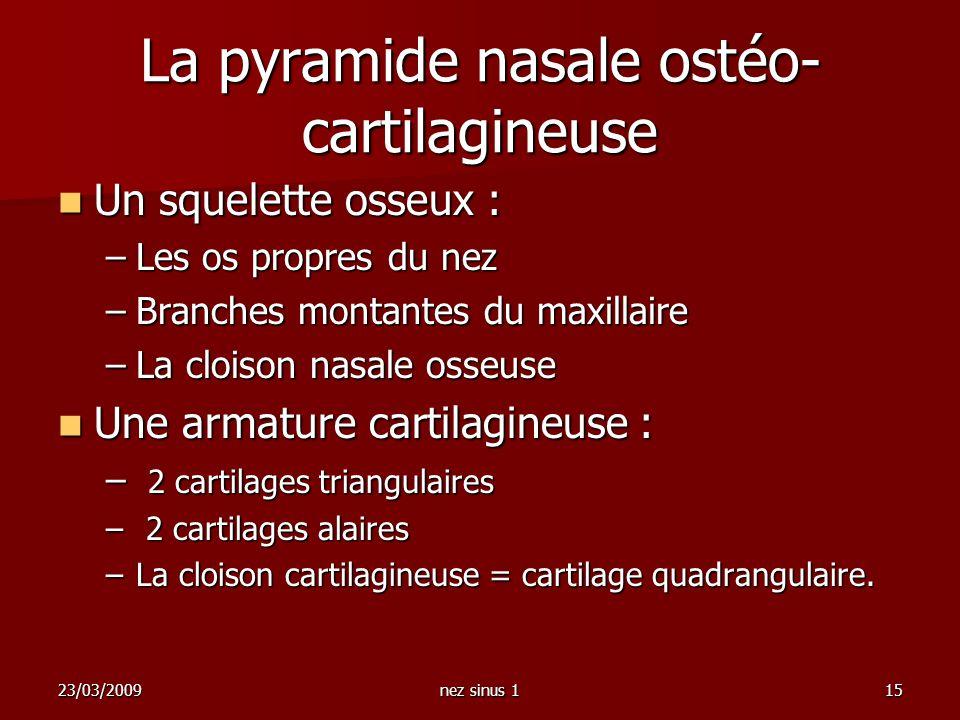 23/03/2009nez sinus 115 La pyramide nasale ostéo- cartilagineuse Un squelette osseux : Un squelette osseux : –Les os propres du nez –Branches montante