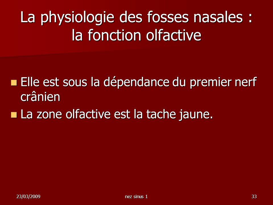 23/03/2009nez sinus 133 La physiologie des fosses nasales : la fonction olfactive Elle est sous la dépendance du premier nerf crânien Elle est sous la