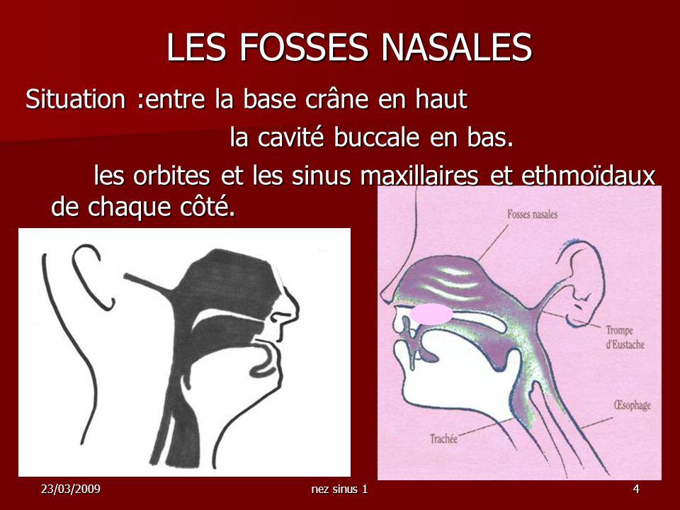23/03/2009nez sinus 14 Situation :entre la base crâne en haut la cavité buccale en bas. les orbites et les sinus maxillaires et ethmoïdaux de chaque c