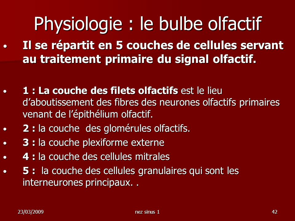 23/03/2009nez sinus 142 Physiologie : le bulbe olfactif Il se répartit en 5 couches de cellules servant au traitement primaire du signal olfactif. Il