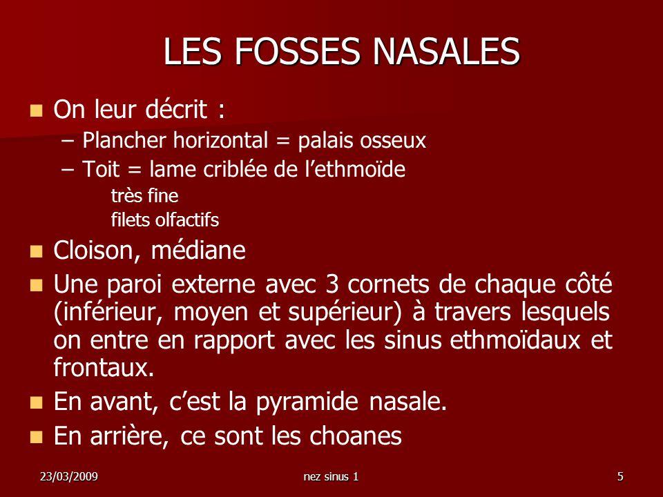 23/03/2009nez sinus 15 LES FOSSES NASALES On leur décrit : – –Plancher horizontal = palais osseux – –Toit = lame criblée de lethmoïde très fine filets