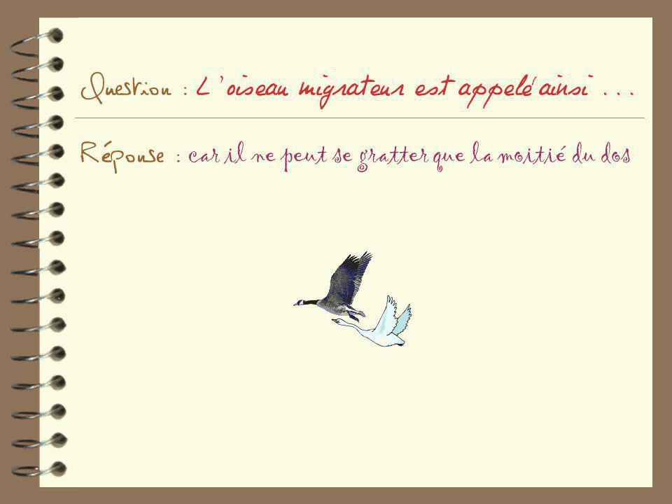 Question : L'oiseau migrateur est appelé ainsi... Réponse : car il ne peut se gratter que la moitié du dos