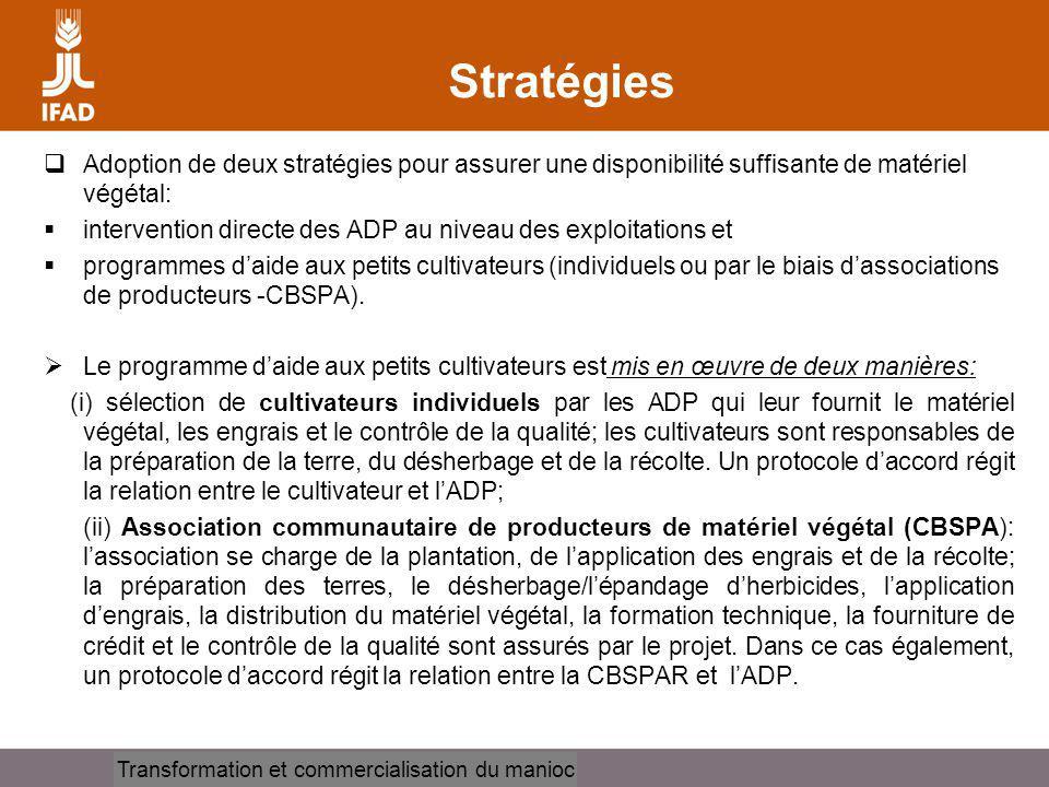 Cassava processing and marketing Stratégies Adoption de deux stratégies pour assurer une disponibilité suffisante de matériel végétal: intervention di