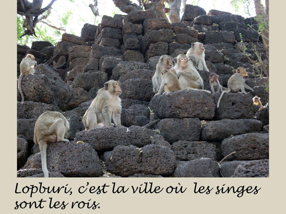 La Thaïlande cest aussi le pays aux nombreux temples. Le temple des singes à Lopburi.