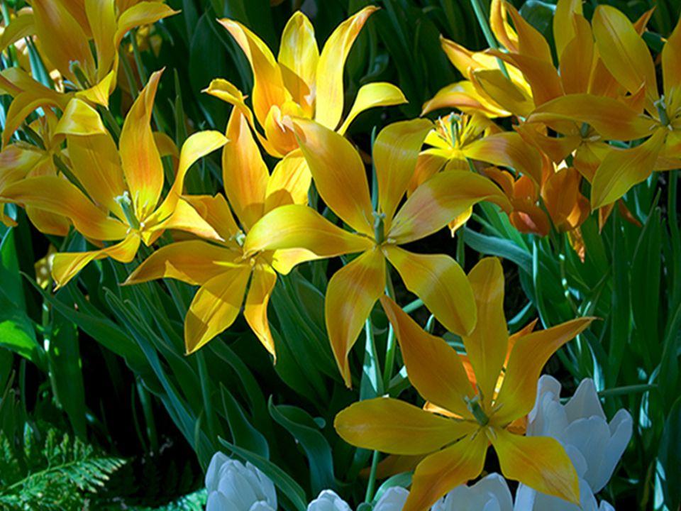 Être aimé…c est savoir chérir… Sans jamais se mesurer… C est de toujours apprécier…l être tel qu il est… Tout en se regardant de plus près… C est d accueillir comme une jolie fleur… L Amour…ou l Amitié avec un grand honneur…