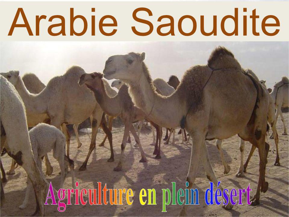 Arabie Saoudite..............................