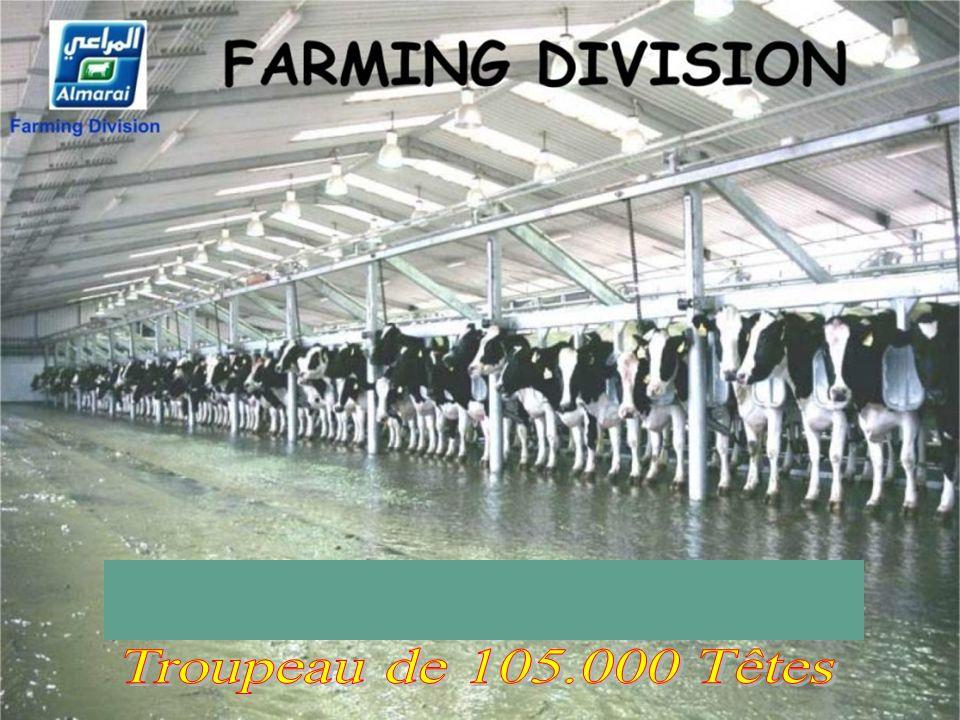 2 oogsten per jaar 110 ton per hectare Maïs: 2 Récoltes/an, 110 Tonnes par hectare Maïs: 2 Récoltes/an, 110 Tonnes par hectare.................................