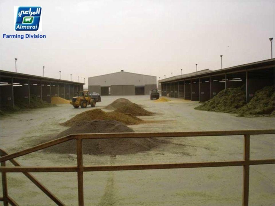 1000 ton hooi per dag! 50 vrachtwagens geladen BESOIN: 1000 tonnes de foin par jour! Soit 50 camions BESOIN: 1000 tonnes de foin par jour! Soit 50 cam