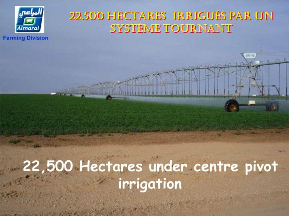 22.500 hectares irrigués par un système tournant 22.500 hectares irrigués par un système tournant..............................