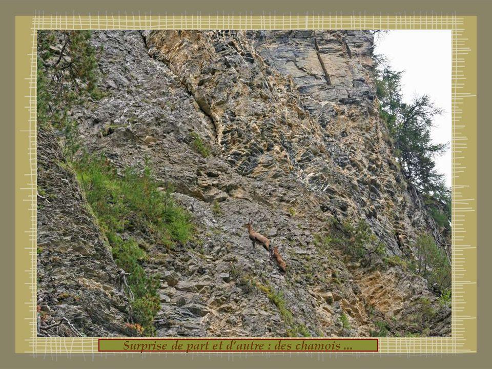Vue magnifique avec au fond le barrage du Tzeusier ou Rawil!