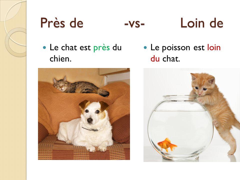 Près de -vs- Loin de Le chat est près du chien. Le poisson est loin du chat.