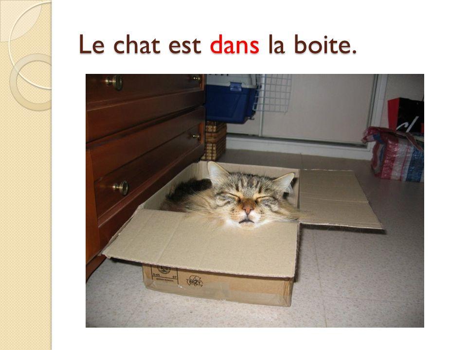 Le chat est dans la boite.
