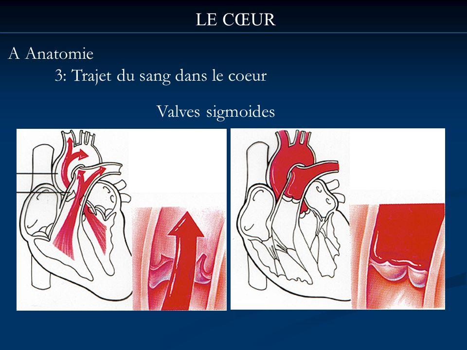 LE CŒUR A Anatomie 3: Trajet du sang dans le coeur Valves sigmoides
