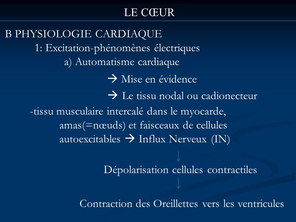 LE CŒUR B PHYSIOLOGIE CARDIAQUE 1: Excitation-phénomènes électriques a) Automatisme cardiaque Mise en évidence Le tissu nodal ou cadionecteur -tissu m