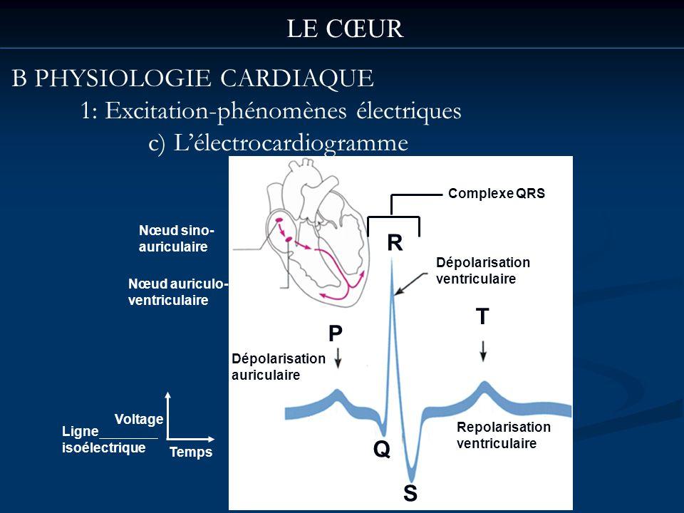 LE CŒUR B PHYSIOLOGIE CARDIAQUE 1: Excitation-phénomènes électriques c) Lélectrocardiogramme Nœud sino- auriculaire Dépolarisation auriculaire Dépolar