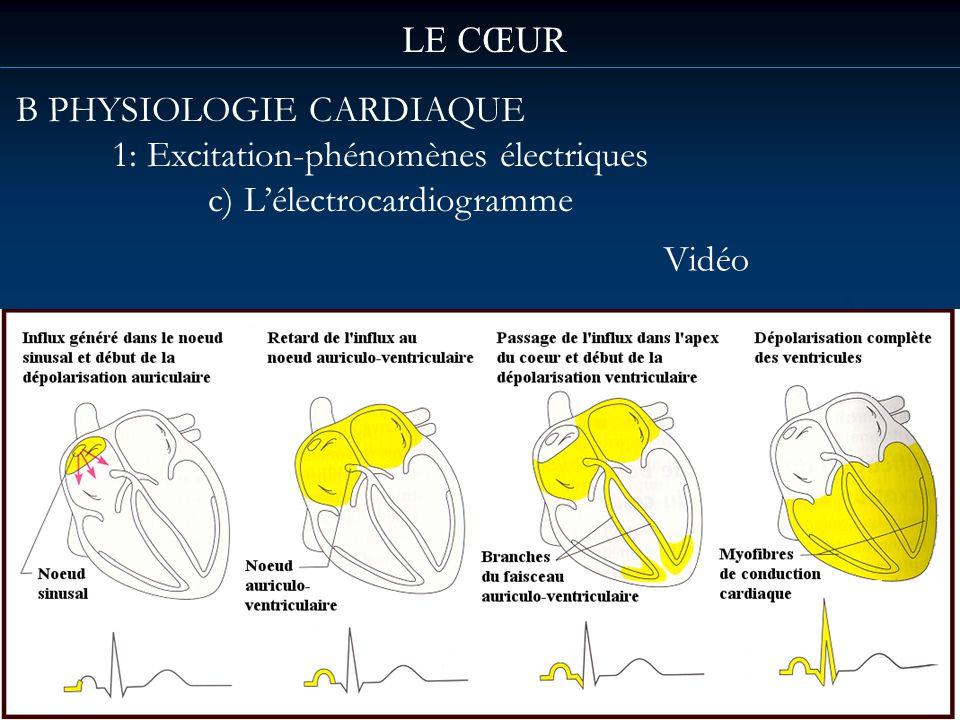 LE CŒUR B PHYSIOLOGIE CARDIAQUE 1: Excitation-phénomènes électriques c) Lélectrocardiogramme Vidéo