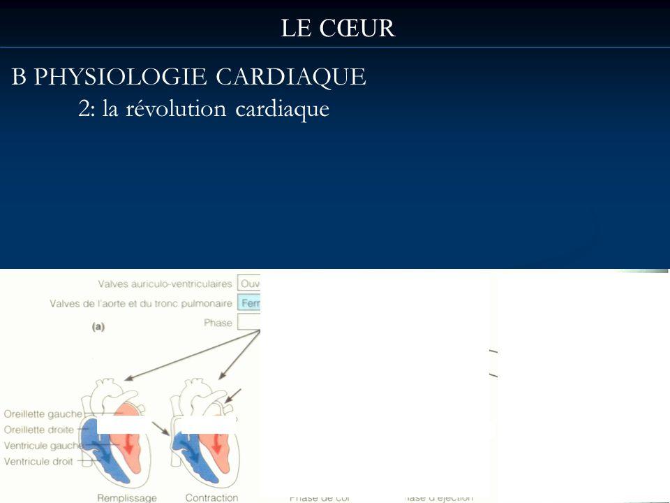 B PHYSIOLOGIE CARDIAQUE 2: la révolution cardiaque LE CŒUR