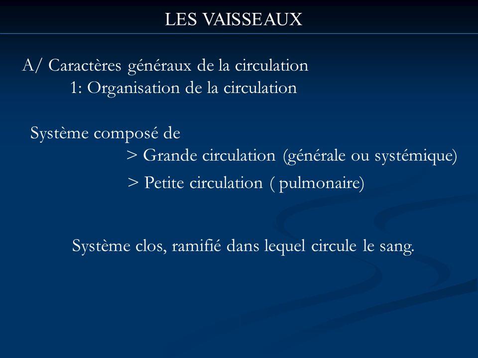 LES VAISSEAUX A/ Caractères généraux de la circulation 1: Organisation de la circulation Système composé de > Grande circulation (générale ou systémiq