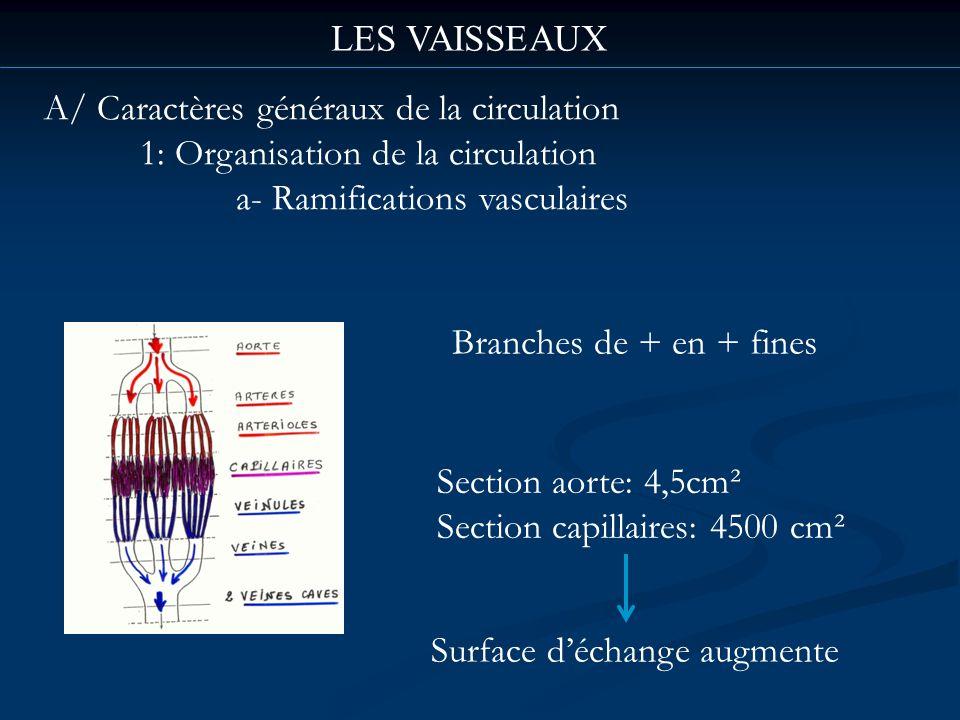 LES VAISSEAUX A/ Caractères généraux de la circulation 1: Organisation de la circulation a- Ramifications vasculaires Branches de + en + fines Surface