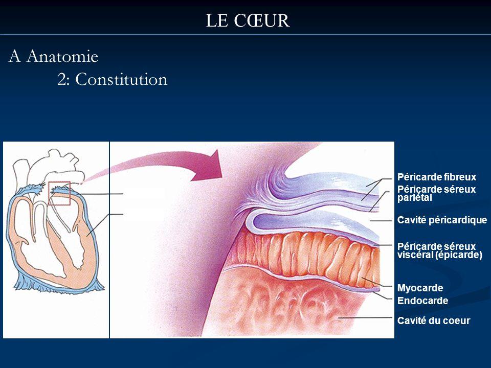 LE CŒUR A Anatomie 2: Constitution Péricarde fibreux Péricarde séreux pariétal Cavité péricardique Péricarde séreux viscéral (épicarde) Myocarde Endoc