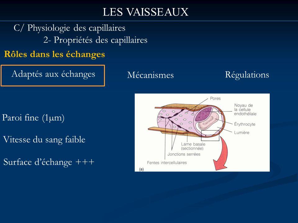 LES VAISSEAUX C/ Physiologie des capillaires 2- Propriétés des capillaires Rôles dans les échanges Paroi fine (1µm) Vitesse du sang faible Surface déc