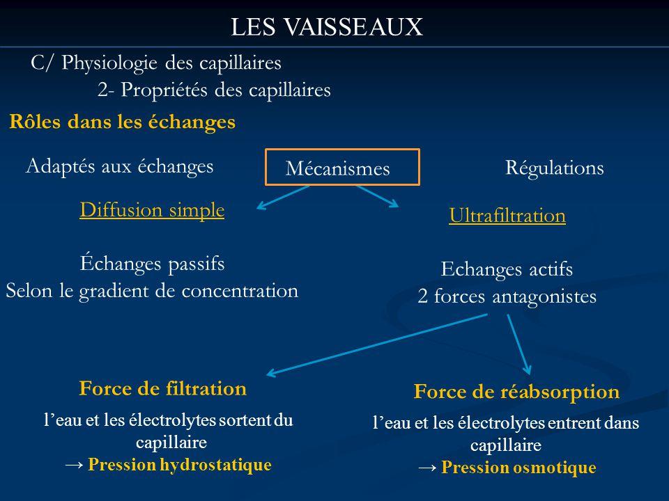 LES VAISSEAUX C/ Physiologie des capillaires 2- Propriétés des capillaires Rôles dans les échanges Adaptés aux échanges Mécanismes Régulations Diffusi